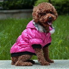 Bunda pro psa s černým lemováním - růžová, S
