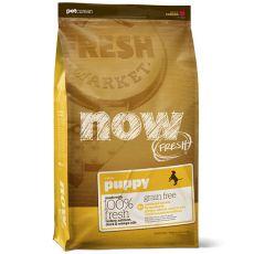 Petcurean NOW FRESH Grain Free PUPPY - 2,72 kg