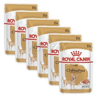 ROYAL CANIN ADULT ČIVAVA 6 x 85 g - kapsička