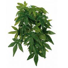 Rostlina do terária Abutilon – závěsná 20 x 30 cm