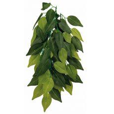 Rostlina do terária FÍKUS – závěsná 20 x 30 cm