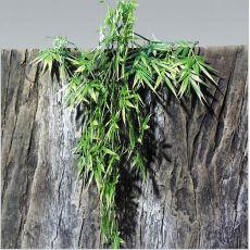 Rostlina do terária TerraPlanta Madagaskar Bambus – 65 cm