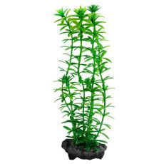 Egeria densa (Anacharis) - rostlina Tetra 30 cm, L
