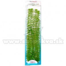 Limnophila sessiliflora (Ambulia) - rostlina Tetra 38 cm