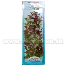 Ludwigia repens (Red Ludwigia) - rostlina Tetra 38 cm, XL