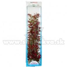 Ludwigia repens (Red Ludwigia) - rostlina Tetra 46 cm, XXL