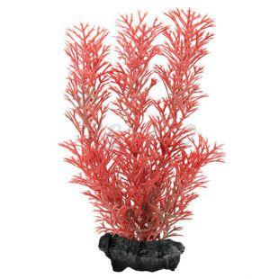 Myriophyllum heterophyllum (Red Foxtail) - rostlina Tetra 15 cm, S