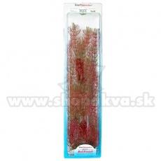 Myriophyllum heterophyllum (Red Foxtail) - rostlina Tetra 38 cm, XL