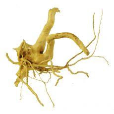 Kořen do akvária Cuckoo Root - 18 x 13 x 13 cm