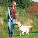Vesta Dog activity, výcviková - hnědá, XL