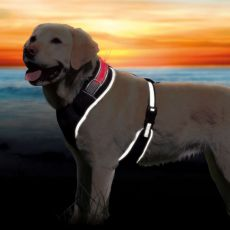 Postroj pro psa se světelným páskem M, 50-70 cm