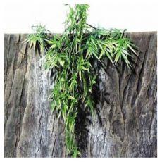 Rostlina do terária TerraPlanta Madagaskar Bambus - 50 cm