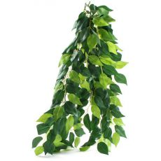 Ficus silk medium - rostlina do terária, 55 cm